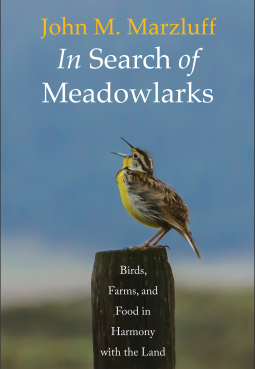 in search of meadowlarks.png